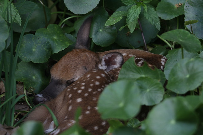 First Fawn of 2019