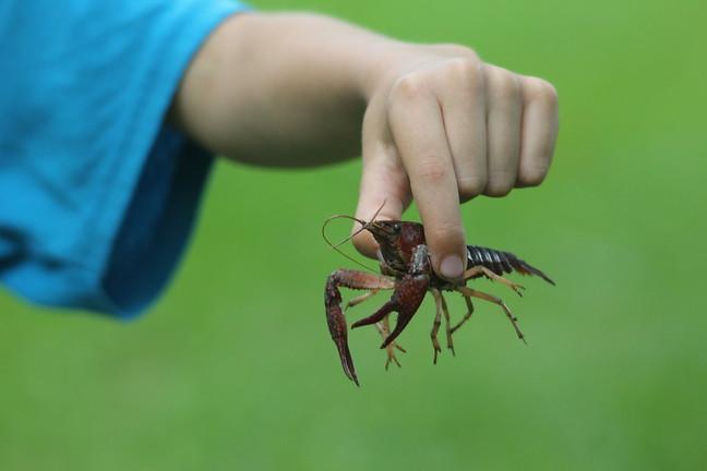 Crawdad Catch