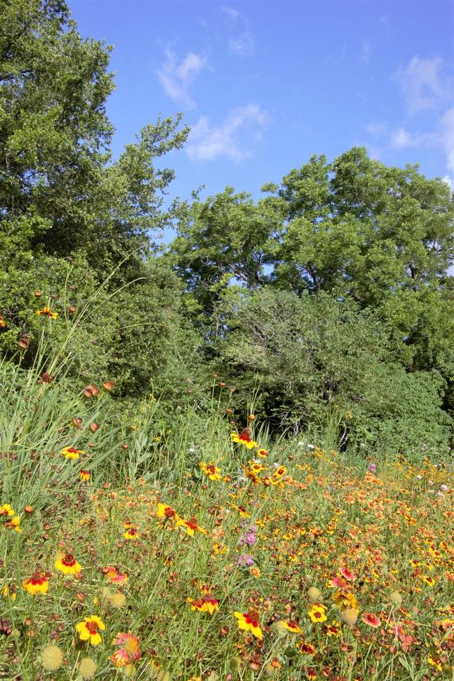 Pocket Prairie Full Bloom