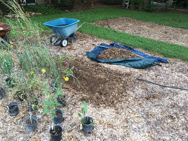 Mulch Removal, Plant Staging
