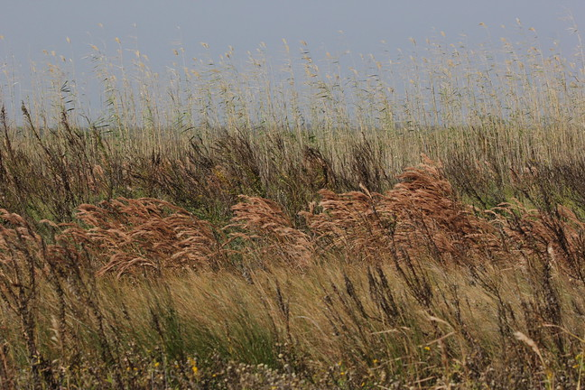 Windy Wavy Grasses