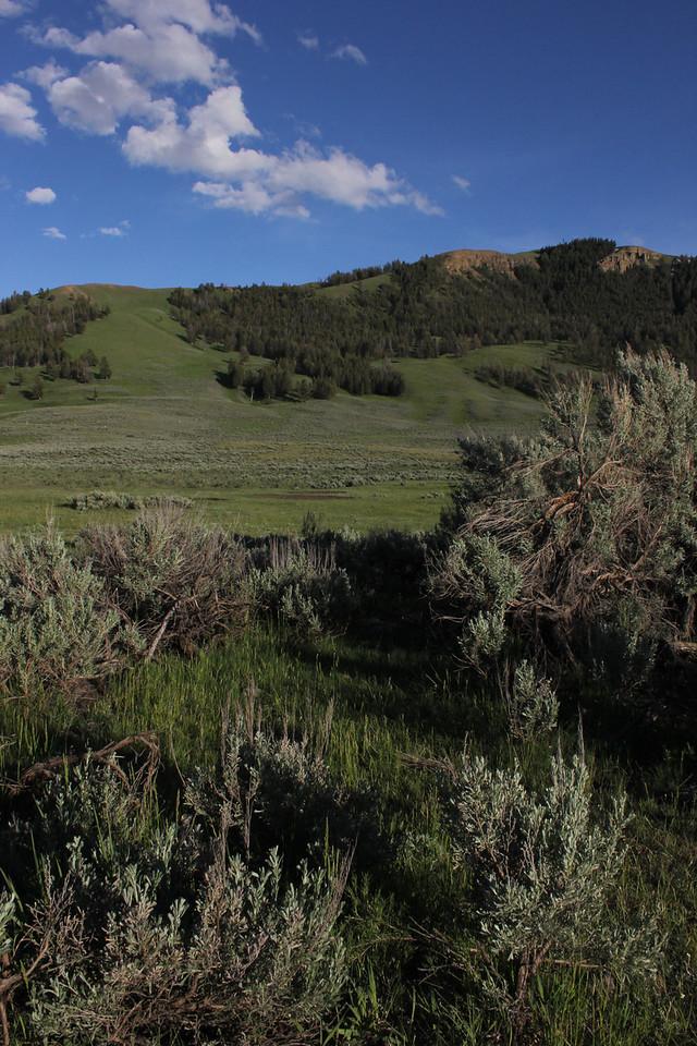 Sage Green Landscape