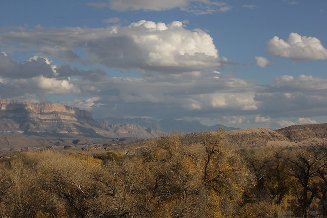 The Chisos Above The Cottonwoods
